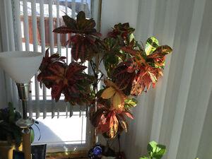 Bouquet naturel croton
