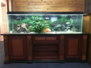 125 Gallon Aquarium with Custom Stand and Fluval FX6