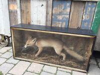 Vintage antique taxidermy French fox birds wing in mouth mancave