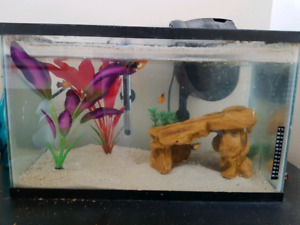 10 gallon aquarium and accessories (includes free fish)