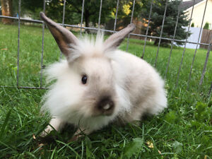 Two Bunnies For Sale to a Good Home!