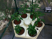 General Hydroponics Rainforest system (group of 4)