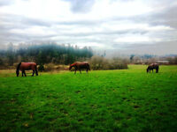 HORSE HELP WANTED CENTRAL NANAIMO