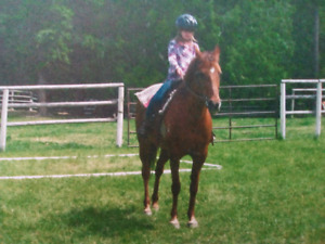 700$, 23 year old mare