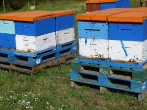 4 Frame Honey Bee Nucs For Sale 2018 Season