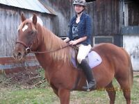 13 Year Old Quarter Horse For Possible Sale