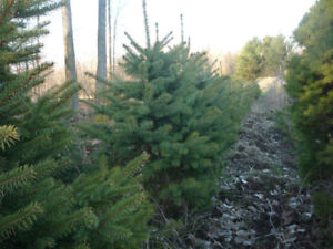 - Trees for Sale -