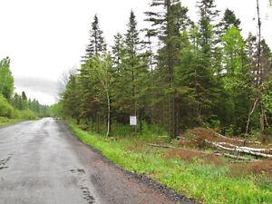Plusieurs beaux terrain Saguenay Saguenay-Lac-Saint-Jean image 2