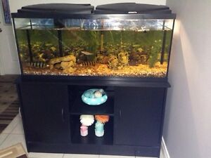 Aquarium with accessories and fish for sale!!