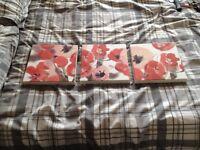 Canvas poppy pictures