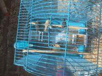 2 bird cages