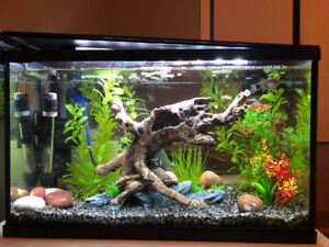 Aquarium 10 Gallon Tank