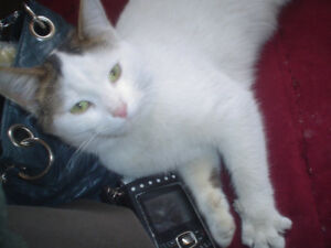 elliot lake cat looking for good home