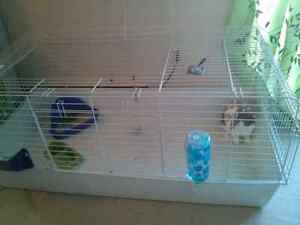Holland lop rabbit for sale London Ontario image 1