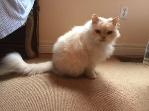 Looking for loving home for two elderly cats