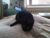 Black cat looking for caring home