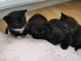 4 beautiful kittens. SOLD