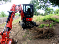 Tree Removal / Stump Removal / Clearing