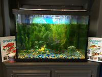 FISH TANK with lots of extras - WOODLANDS SW (Excellent deal!)