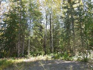 7.5 acre lot minutes to Fort St James Prince George British Columbia image 6
