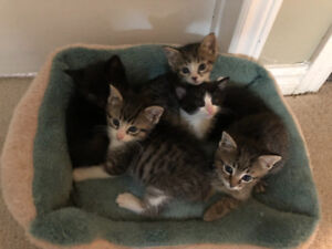 Kittens looking for a good home!