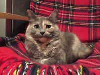 Missing Cat Matilda