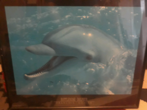 💥Dolphin Picture $10💥