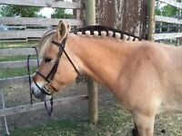 Jumping pony for lease!!
