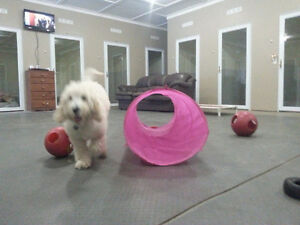 CAGE FREE DOG BOARDING AND DAYCARE@Apple Ridge Farm