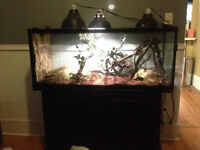 FREE/ ADOPTION California King Snake, TANK/Accessories INCLUDED