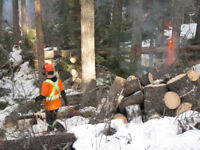 FORESTRY FALLERS & LABOURERS