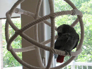 LARGE Parrot swing - Brand new!