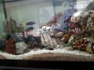 60g fish tank