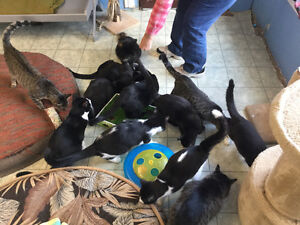 Volunteers needed for animal shelter in St. Thomas! London Ontario image 7