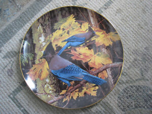 Collector Plate – Stellar's Jay by Glen Green