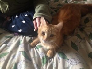 ginger female teen  769-9192