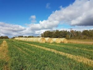 Hay and green feed for sale