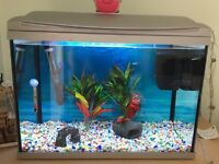 65 litre fish tank