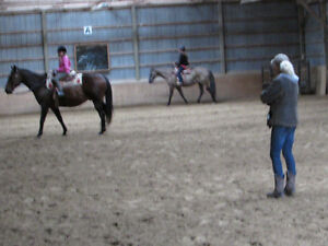 Horse boarding by the Ganaraska Forest Peterborough Peterborough Area image 3