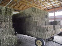1st cut 60% alfalfa 40% timothy for sale small square bales