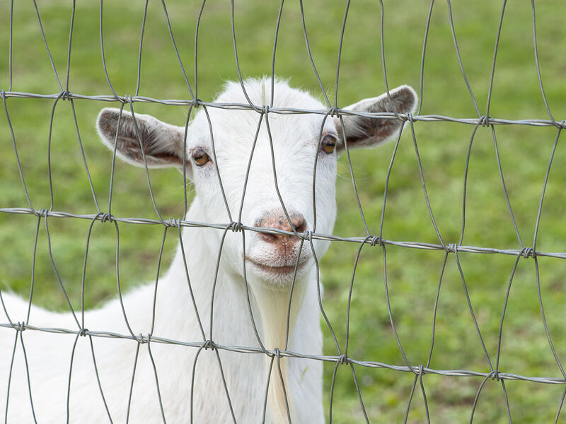 Best Goat Fences Ebay