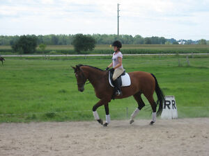 Dressage and all-round horse