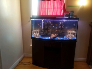 80 gallon bow front fish tank complete