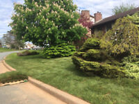 Little Bay Landscaping - Insured - Free Quotes
