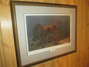 DU Cougar Print with frame