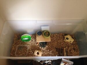 Hamsters with large cage