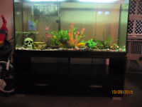 65 gallon tank and stand (Reduced from $300)