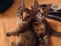 Rescue Kittens Looking for a Home