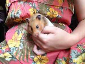 Hamster and House For Sale :)