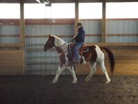RMO) Western and English riding lessons